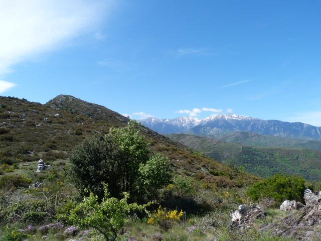 Le Canigou en arrivant sur Roca-Roja